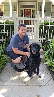 Labrador Retriever Dog for adoption in Austin, Texas - Dakota