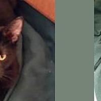 Adopt A Pet :: Alejandro - Chicago, IL