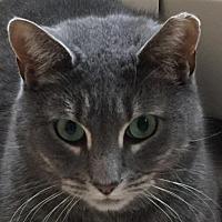 Adopt A Pet :: Johanna - Budd Lake, NJ