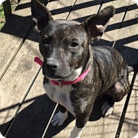 Adopt A Pet :: Penny - pending - Manchester, NH