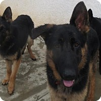Adopt A Pet :: Buddy - Moreno Valley, CA