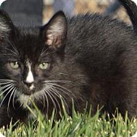 Adopt A Pet :: Kendall - Corona, CA