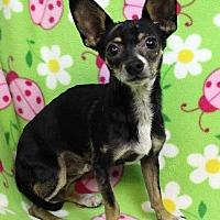 Adopt A Pet :: OJo - Westminster, CO