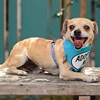 Adopt A Pet :: Jango - Pacific Grove, CA