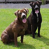 Adopt A Pet :: Huck (CNC) - Allentown, PA