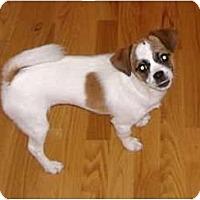 Adopt A Pet :: Ginger - Thomasville, NC