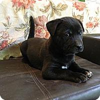 Adopt A Pet :: Muldoon - Bulverde, TX
