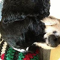 Adopt A Pet :: Annie - Ottawa, ON