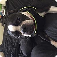 Adopt A Pet :: Rachel - Austin, TX