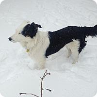 Adopt A Pet :: Rain - Denver, CO