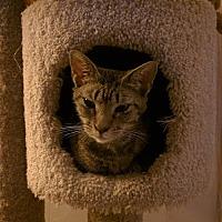 Adopt A Pet :: Gracie - Smyrna, GA