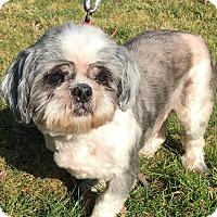 Adopt A Pet :: Charlie - Salem, OR