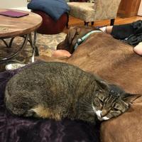 Adopt A Pet :: Marimba - New Orleans, LA