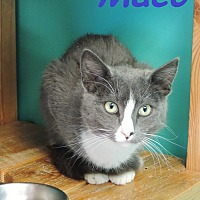 Adopt A Pet :: Maco - Brookings, SD