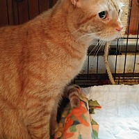 Adopt A Pet :: Leo - Middletown, NY