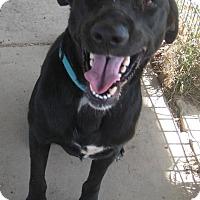 Adopt A Pet :: BAXTER - Pilot Point, TX