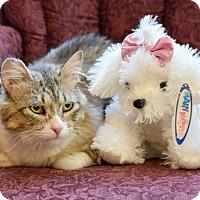 Adopt A Pet :: Elle - Boise, ID
