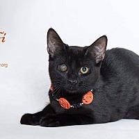 Adopt A Pet :: Toshi - Riverside, CA