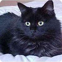 Adopt A Pet :: Lola (Loving!) - Portland, OR