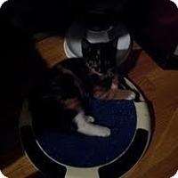 Adopt A Pet :: Sabrina - Brooklyn, NY