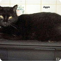 Adopt A Pet :: Aggie - Jacksonville, FL