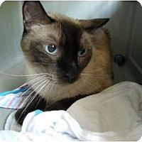 Adopt A Pet :: Sterling - Hurst, TX