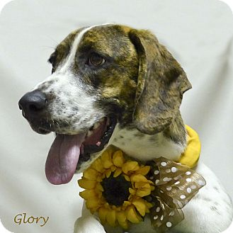 Basset Hound Mix Puppy for adoption in Kerrville, Texas - Glory