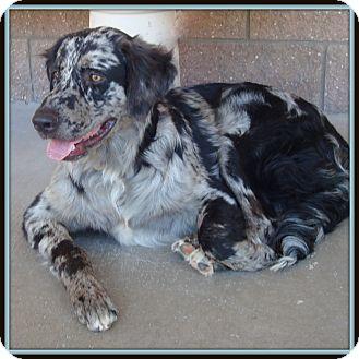 Anatolian Shepherd Mix Dog for adoption in Glendale, Arizona - Lila