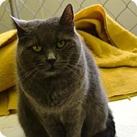 Adopt A Pet :: Zora - East Smithfield, PA