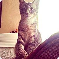 Adopt A Pet :: Neil REDUCED FEE - Lafayette, CA