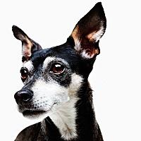 Adopt A Pet :: Sargent the Underdog - los Angeles, CA