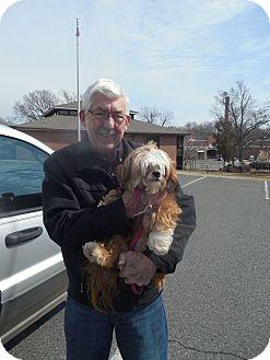 Lhasa Apso Mix Dog for adoption in Albemarle, North Carolina - Lucy