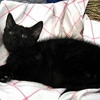 Adopt A Pet :: Liberty - Redwood Falls, MN