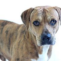 Mixed Breed (Large) Mix Dog for adoption in Bradenton, Florida - Banjo