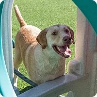 Adopt A Pet :: Ruger - East McKeesport, PA