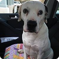 Adopt A Pet :: Marshall - Bardonia, NY