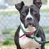 Adopt A Pet :: Clementine Rose - Philadelphia, PA