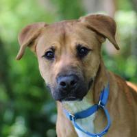Adopt A Pet :: Frankie - Elkhorn, WI