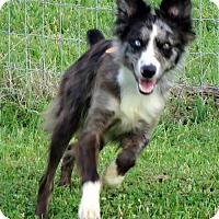 Adopt A Pet :: Reno - Evansville, IN