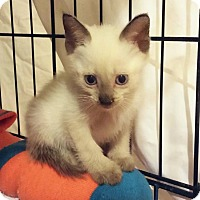 Adopt A Pet :: Hallo - New Smyrna Beach, FL