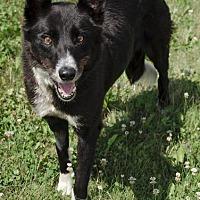 Adopt A Pet :: BINDI - Sandusky, OH