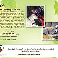 Adopt A Pet :: Pierce - Ottawa, ON