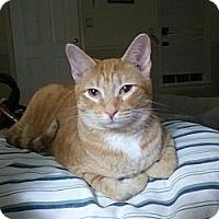 Adopt A Pet :: Tito - Little Rock, AR