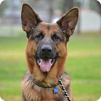 Adopt A Pet :: Flintstone - Altadena, CA