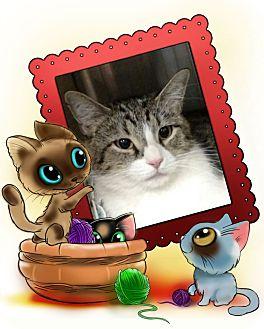 Domestic Shorthair Cat for adoption in Pueblo West, Colorado - Mara