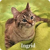 Adopt A Pet :: Ingrid - Bentonville, AR
