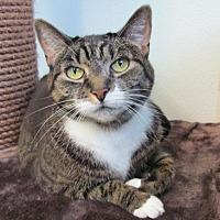 Adopt A Pet :: Maggie 2 - Cumberland, ME