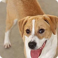 Adopt A Pet :: Colby-Adoption Pending - Pinehurst, NC