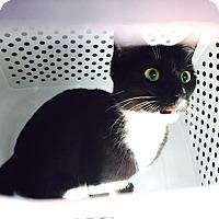 Adopt A Pet :: Moon - Los Angeles, CA