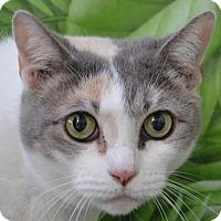 Adopt A Pet :: Callie - Englewood, FL